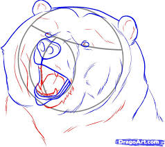 how to draw a realistic bear draw real bear step by step