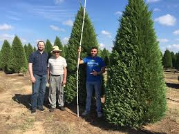 brothers cut 10 foot tree for casa marianists