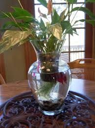 centerpieces the secret weapon of an organized mom beta fish