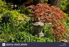 Japanese Garden Lamp by Part Of Japanese Garden Lighting And Red Maple Leaves Stock