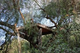 ramshackle solid tree house humble beginnings