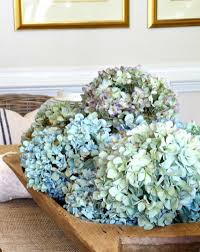 dried hydrangeas how to water hydrangea flowers the gardening cook