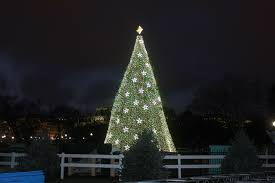 how many christmas lights per foot of tree obama lights national christmas tree in festive musical ceremony