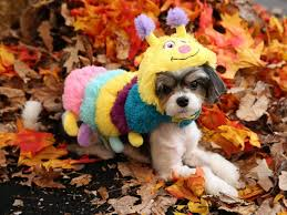 this year u0027s top pet halloween costume trends abc news