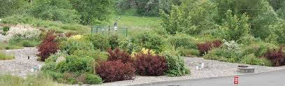 washington state native plants how does your rain garden grow best plants for northwest wsu