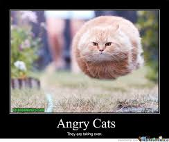 Meme Angry Cat - angry cats by igotobecrazy meme center