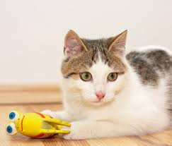 toys that are safe for your kitten and cat toys to avoid