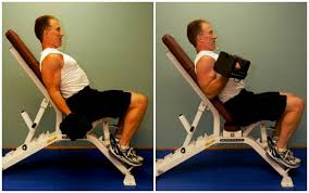 Bench Press For Biceps - anti bro arm movements bicep curls for a healthy back breaking