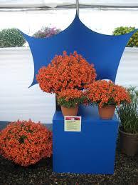 container garden design color proven winners