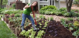 What Type Of Soil For Vegetable Garden - 6 steps to grow your own vegetable garden smart ideas