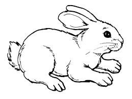 free printable rabbit coloring pages kids coloringeast