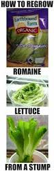 Vegetables You Can Regrow by How To Easily Re Grow Romaine Lettuce From A Stump Indoors