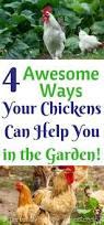 best backyard chickens 632 best backyard chickens u0026 ducks images on pinterest backyard