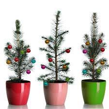 grow your own mini living tree