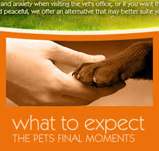 pet euthanasia at home sweet dreams in home pet euthanasia