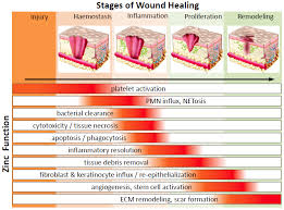 nutrients free text zinc in wound healing modulation