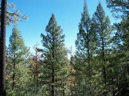 nature pic of the day 20120415 tree tops