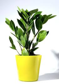 best indoor plants low light good small house plants super hearty house plants best small indoor