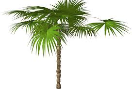 palm tree png free icons and png backgrounds