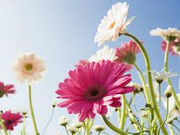 Flower Wallpaper Most Beautiful Flowers Wallpapers U2013 Hd Flowers Wallpapers U2013 Hd