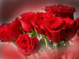 valentines day flowers where to get s day flowers in los angeles cbs los angeles