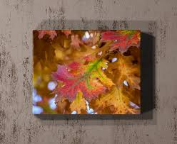 fall colors rogue aurora photography