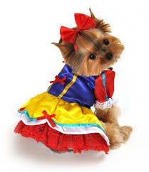 small dog costumes u2013 festival collections