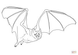common vampire bat coloring page free printable coloring pages