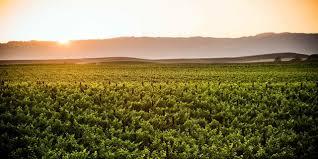 russian river brewing company u0027s cilurzo talks california
