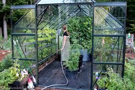 gorgeous ant control in vegetable garden vegetable gardening how