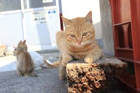 cat island cats outnumber humans on aoshima island in ehime prefecture fast