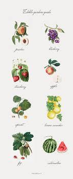 edible photo edible landscape ideas in honor of design