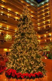 giant everest fir christmas tree with led lights 14 u0027 giant