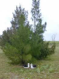 invasive non native plants non native plants