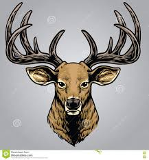 hand drawing style of deer head stock vector image 72386103