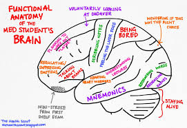 Image Of Brain Anatomy Functional Anatomy Of A The Student U0027s Brain The Almost Doctor U0027s