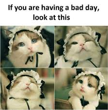 Having A Bad Day Meme - if you are having a bad day look at this cats know your meme