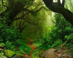 jungle backdrop rainforest pop up drop backdrop pop0022 grosh backdrops