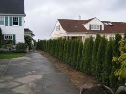 exterior fantastic various tall privacy tree in green grass