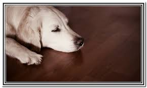 most durable hardwood floors for dogs home design ideas
