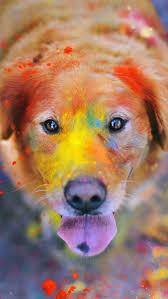 best 25 dog wallpaper ideas on pinterest dog illustration dog