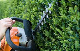 Gardening Pictures Bbc Gardening Gardening Guides Techniques Preventing Accidents