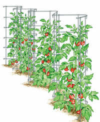 Climbing Plants On Trellis Plant Trellis Support Climbing Plants In Balconies And Garden