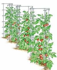 Trellis For Climbers Garden Design Garden Design With Plant Trellis Support Climbing
