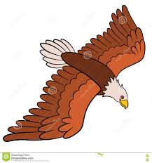 attractive inspiration eagle pictures for kids bald eagle facts