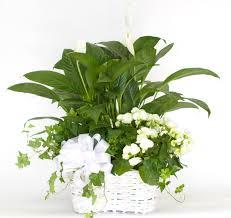 mother u0027s day archives flowerama columbus