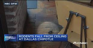 Laminate Flooring On Ceiling Rodents Fall From Ceiling At Dallas Chipotle