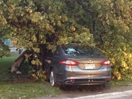 car crashes into tree in corner brook business cbc news