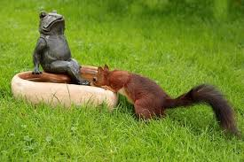 squirrel facts and nutty gift ideas the gift ideas list site