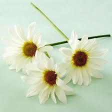 Daisy The Flower - best 20 daisy flower meaning ideas on pinterest daisy scouts